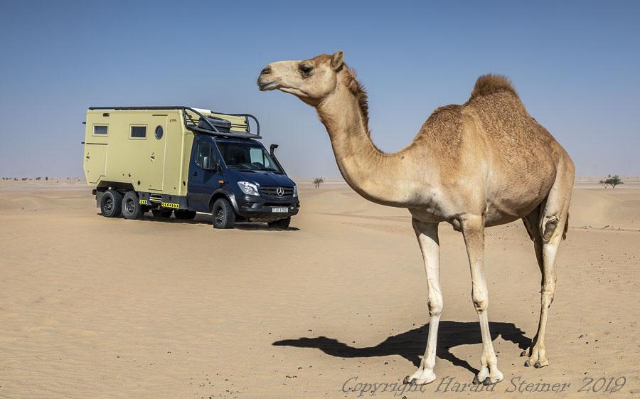 TTT with a camel